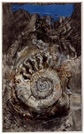 GVT01678_Dis_Ammonite.jpg